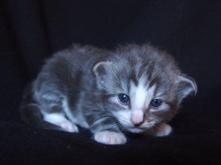 2+1 weeks old -Chris Mr