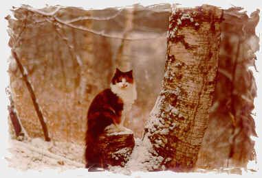 storia gatti norvegesi