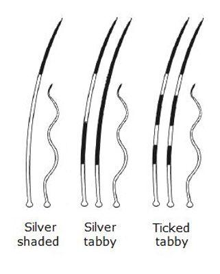 silver_tiked.jpg
