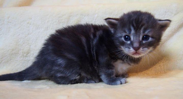 3 settimane - 3 weeks old