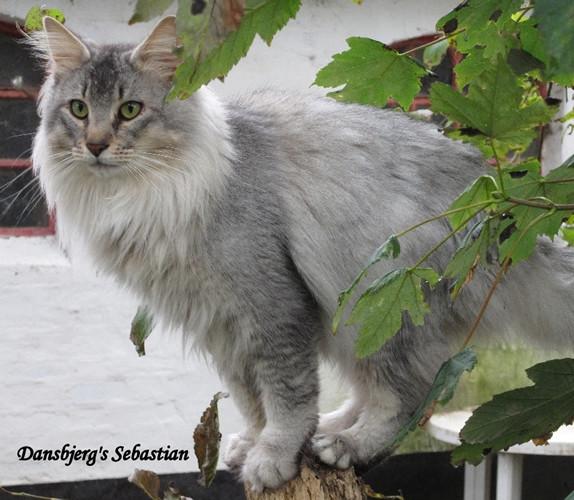 Dansbjerg's Sebastian.jpg