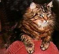 gjervfjellet_kitty.jpg