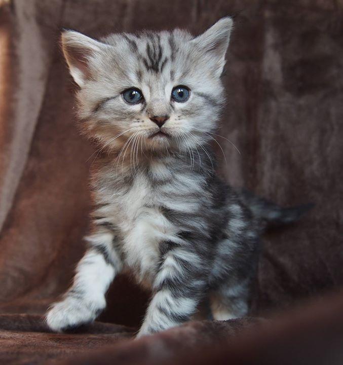 5 settimane - 5 weeks old