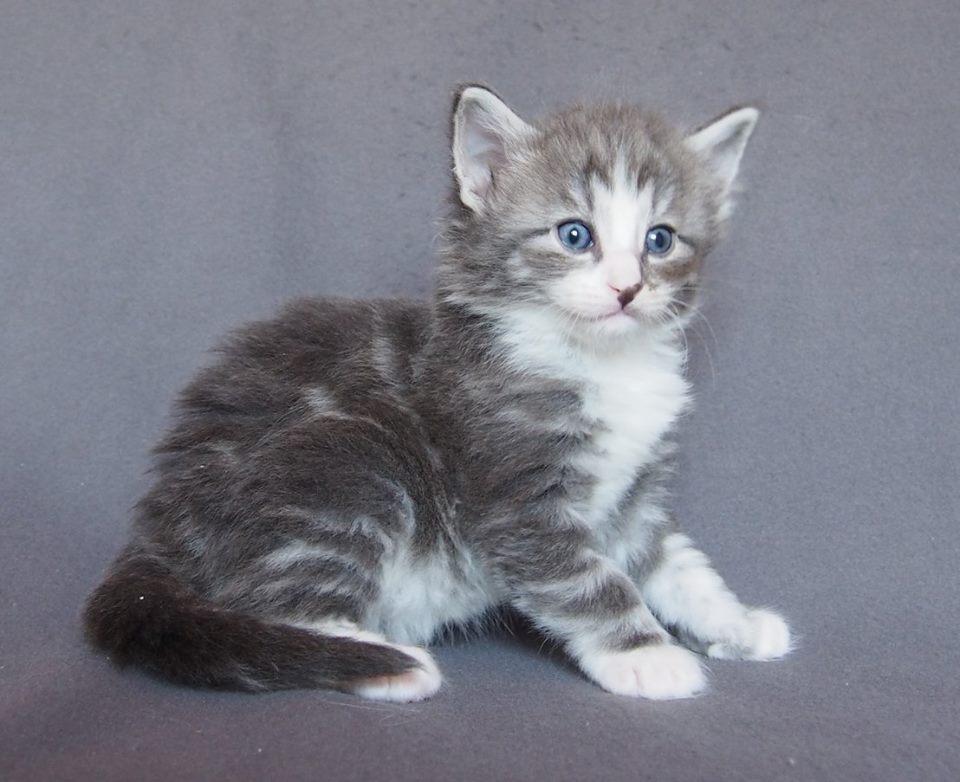 Chris Mr Big, 4 weeks old-