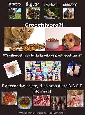barf dieta gatti
