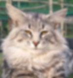 Tingoskatten's Jarl.jpg