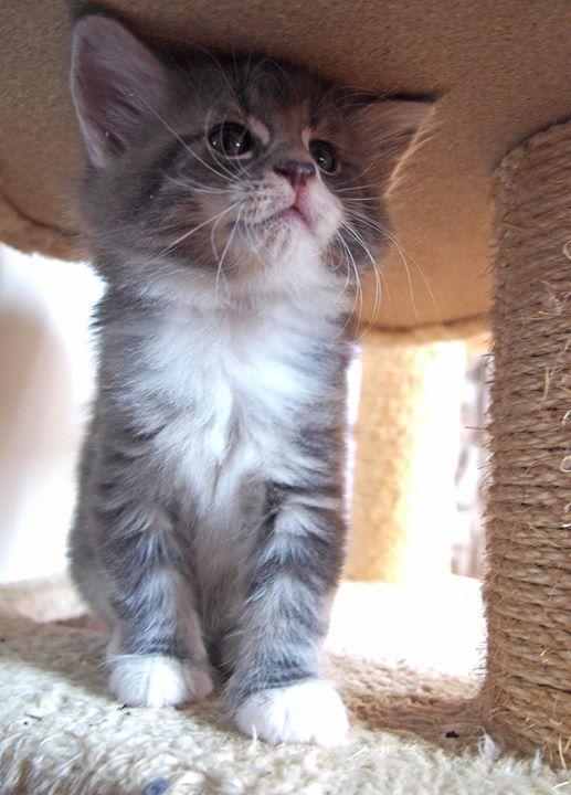 Cristallo di Rocca - male -6 weeks old