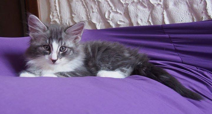 8,2 weeks old