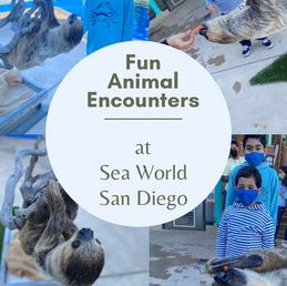 Fun Animal Encounters at Sea World San Diego.