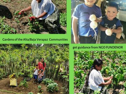 Community Gardens of Alta & Baja Verapaz