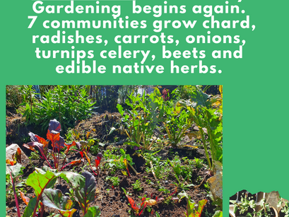 Backyard Garden Education in our Rural Indigenous Communities - Your donation gives education/seeds.
