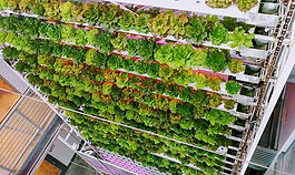 Can Urban Food Systems become long term, viable contributors to a resilient built environment?