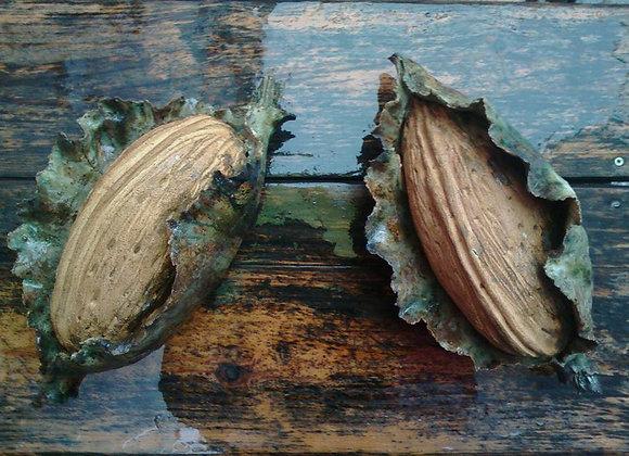 ceramic almond
