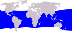 Bryde's whale distribution map