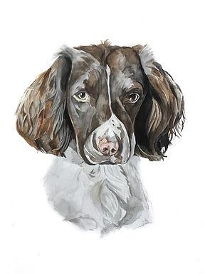 Watercolour dog pet portrait