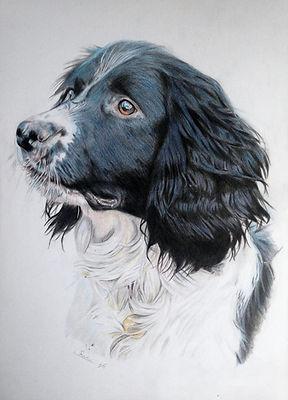 Coloured Pencil Dog Pet Portrait