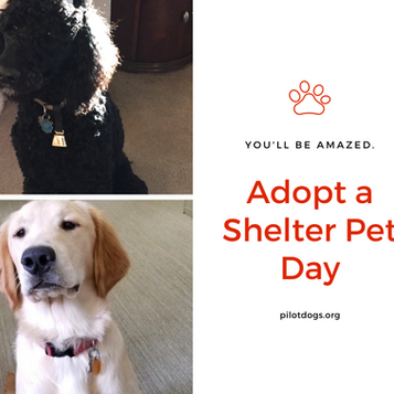 Adopt a Shelter Pet Day