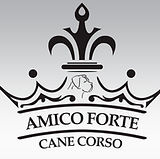 Amico Forte Banner1.jpg