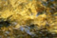 refletcarteok2.jpg