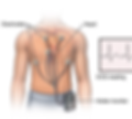 holter-monitoring.png