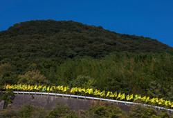 FLAGS PROJECT in Takamijima