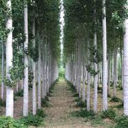 Exiting La Réole; cedar grove