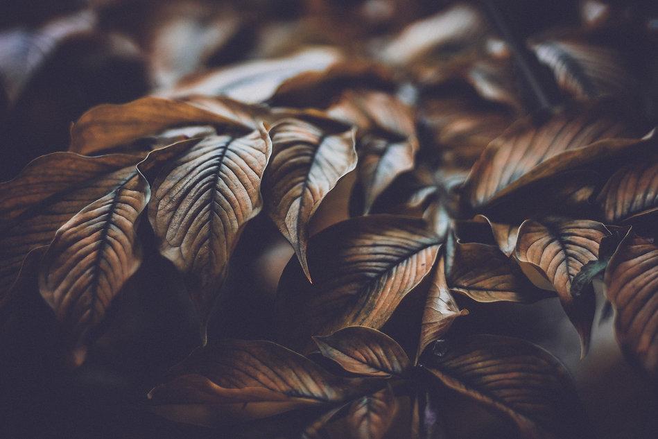 leaves-4818626.jpg