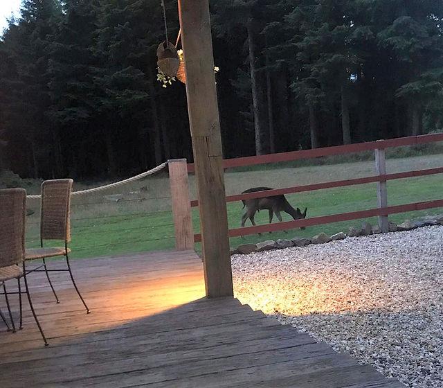 deer ay lodge (2).jpg