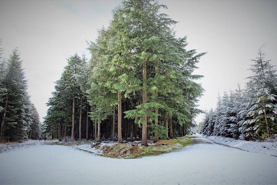 Haldon Lodge with SNOW_21-01-24_0014.jpg