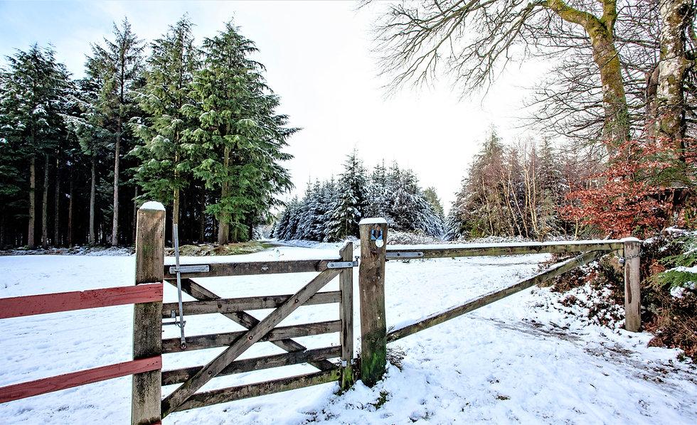 Haldon Lodge with SNOW_21-01-24_0011.jpg