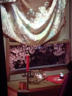 小窓からの夜桜