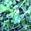 Thumbnail: Many Plants Healing Balm