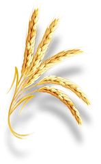 wheat1-.png