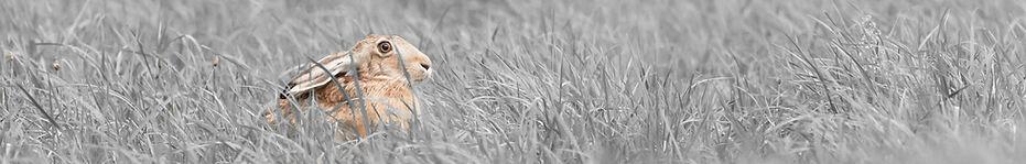 Wildtier Fotografie   mh-wildlifephoto   Manfred Hesch
