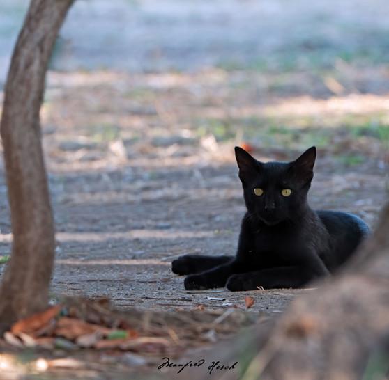 Katze unter Olivenbäumen - PELOPONNES Griechenland