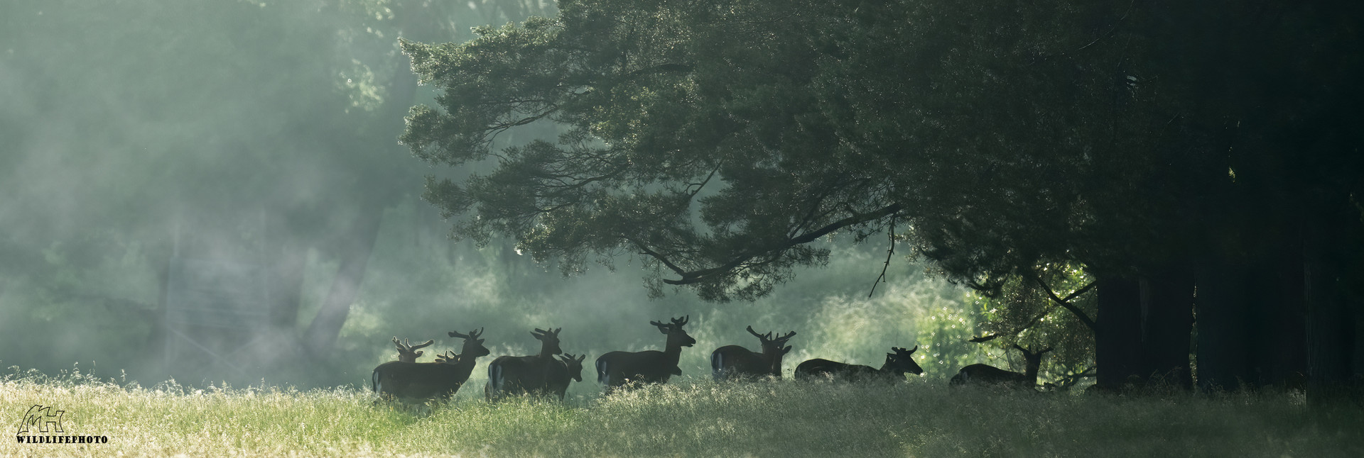 Gruppe Hirsche