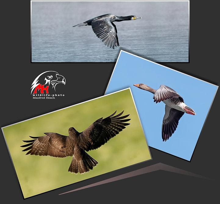 Foto Workshop - Vögel im Flug