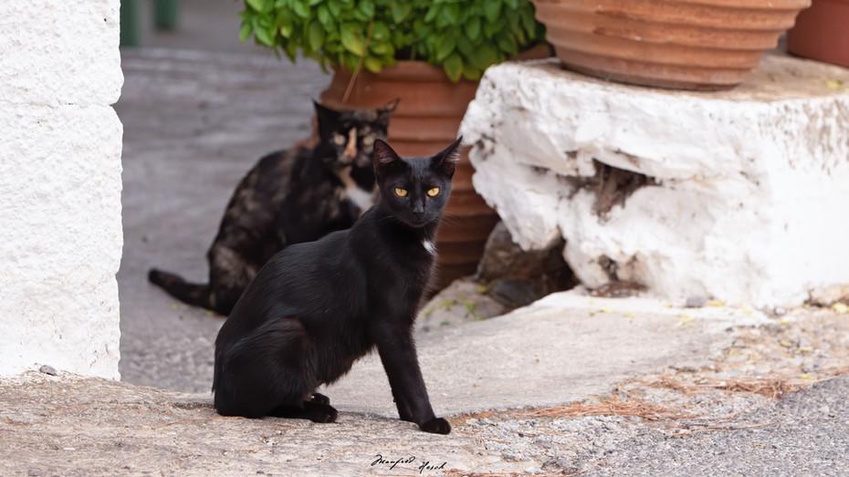 Strassenkatzen auf der Insel Kythira