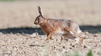 Wildtier Fotografie   Manfred Hesch