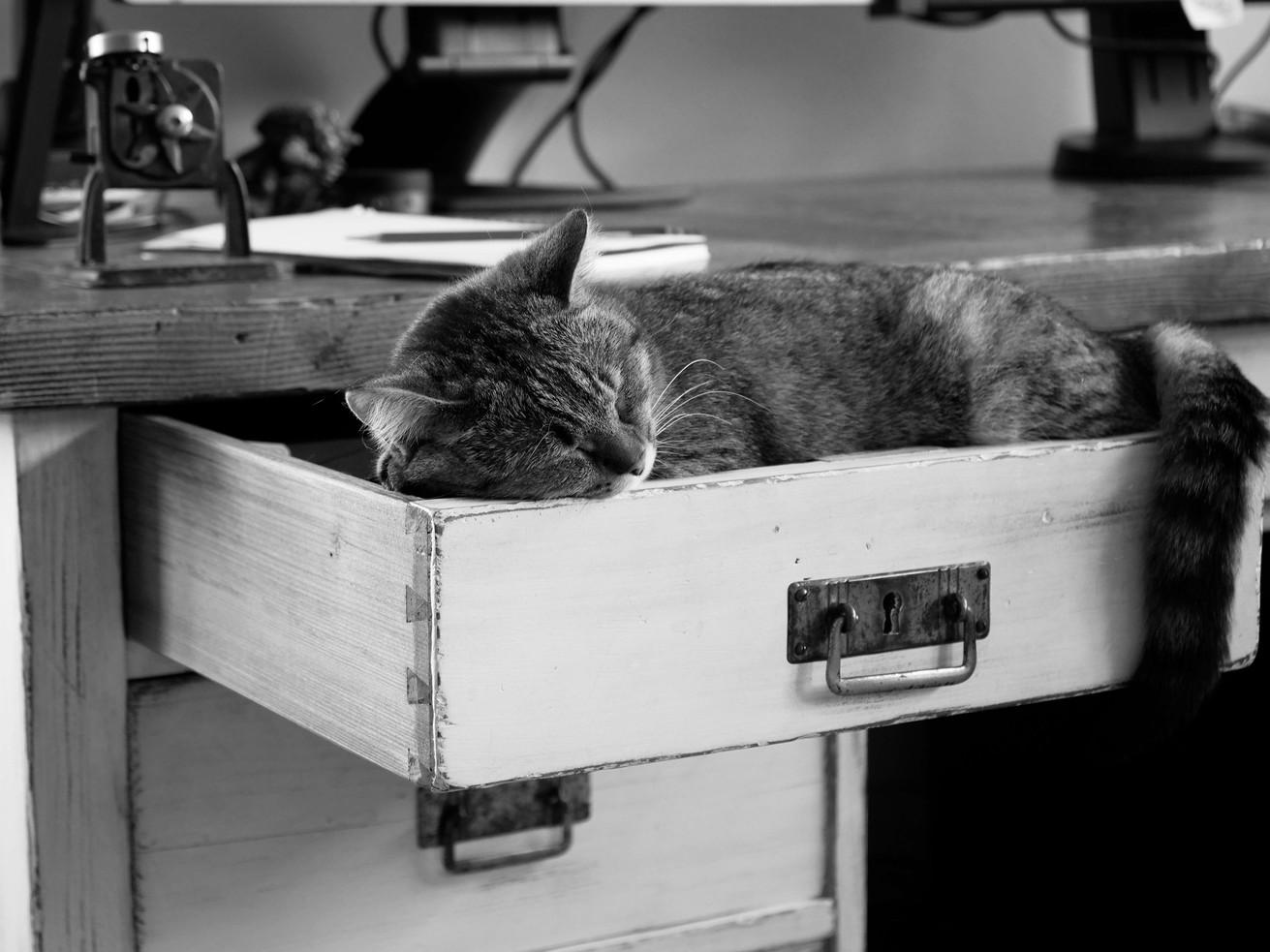 Schönheitsschlaf am Schreibtisch - MONDSEE Austria