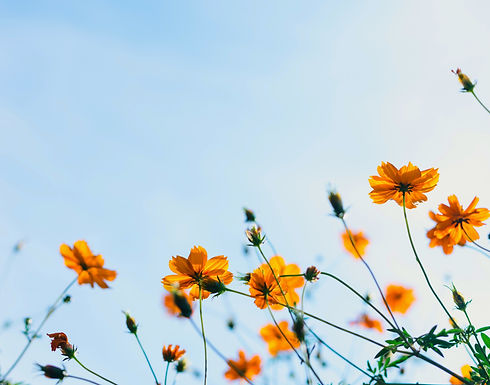 Wild Flowers_edited.jpg