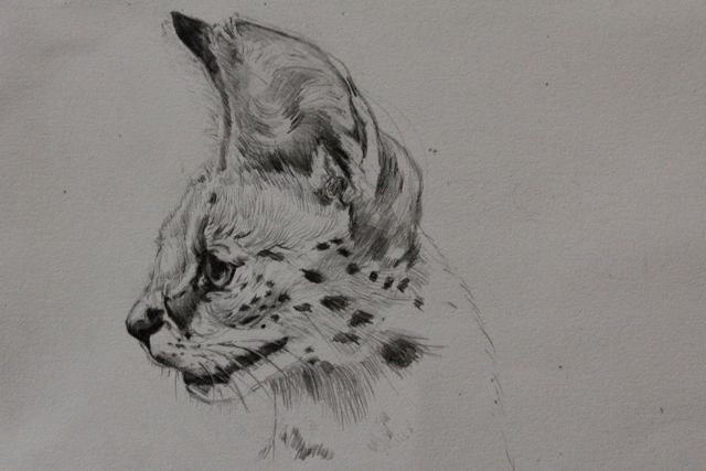 MARCH 2011, STUDYING SERVAL CATS, NDARAKWAI CAMP, TANZANIA