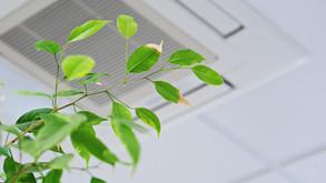 Les 5 raisons d'améliorer la qualité de l'air dans votre espace de travail selon Groupe Global
