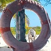 Yacht Integration, Scott Whittaker Marine, Barbuda