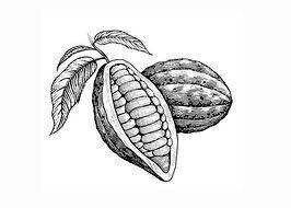 cacao pods .jpg