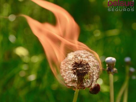 ¿Qué seguro cubre mis perdidas por incendios forestales?