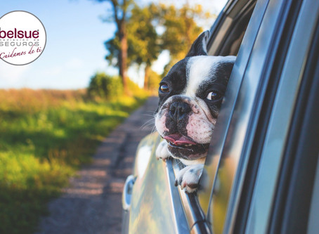 ¿Por qué sube la prima del seguro del coche cada año?