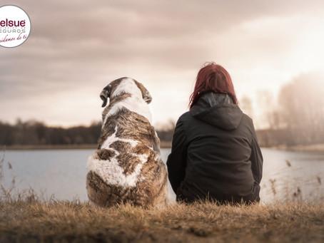 ¿Debo contratar un seguro para mi mascota?