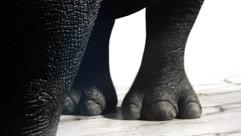 rhino_feet.jpg