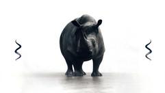 rhino_begin.jpg